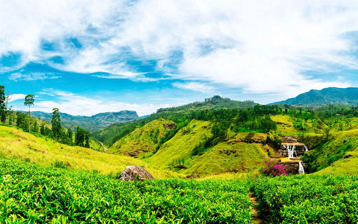 Nuwaraeliya-tea factory /Horton plains